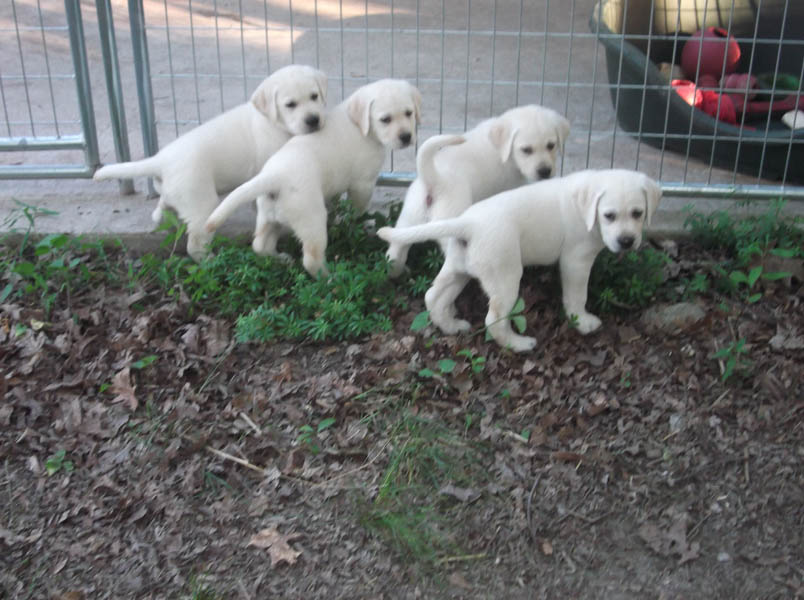 Puppy enrichment area