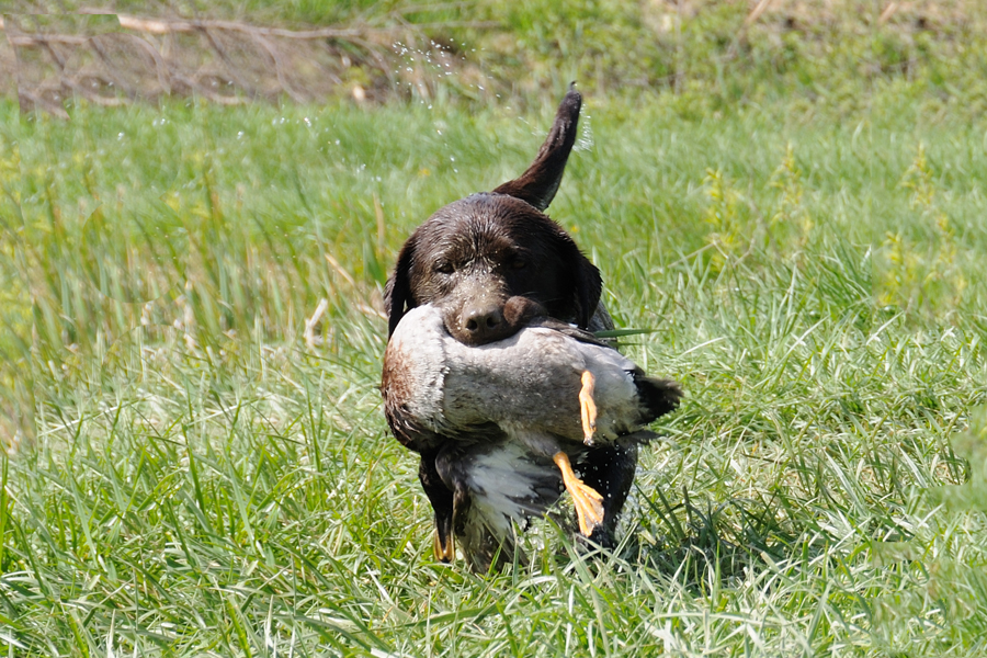 Ranger with duck